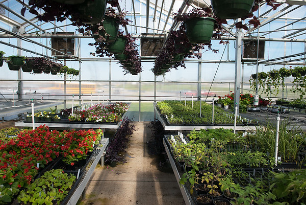 Plants are for sale during Monday's Joplin FFA plant sale at Franklin Tech.<br /> Globe | Roger Nomer