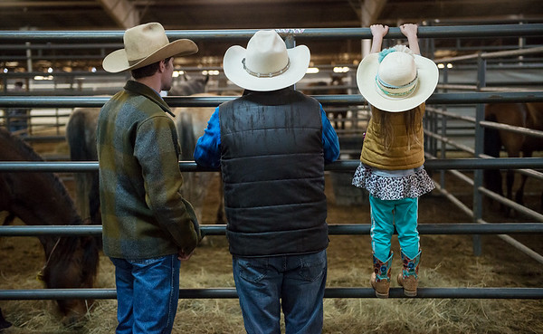 Wylee Aldridge, 4, Carthage, stretches for a better look as she attends the horse sale with her father Doug, left, and grandfather Mark Gowing on Friday at Civil War Ranch in Carthage. <br /> Globe | Roger Nomer