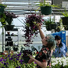 Kaila Winn, Joplin High junior, shops for plants during Monday's Joplin FFA plant sale at Franklin Tech.<br /> Globe | Roger Nomer