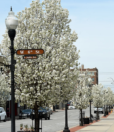 Bradford pear trees line Joplin street in the downtown area on Friday.<br /> Globe | Laurie Sisk