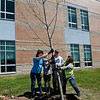 From the left: Lions Club LEO volunteers Audrey Garoutte, 16, Madeleine Garoutte, 13, Irving Principal Josh Depoe and Debbie Cantrell, of the Lions Club M6 District, help position one of nine tulip poplars planted Saturday by the volunteers at the school.<br /> Globe | Laurie Sisk