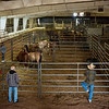 The Bureau of Land Management holds an adoption and sale event for wild horses and burros on Friday in Carthage.<br /> Globe | Roger Nomer
