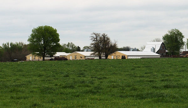 A corporate hog farm is visible from Darvin Bentlage's property near Golden City on Thursday.<br /> Globe | Roger Nomer