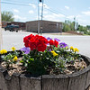 Granby citizens have adopted planters in the downtown area and decorated them with flowers.<br /> Globe | Roger Nomer