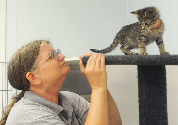 Globe/Roger Nomer<br /> Mari Sipeer plays with a kitten up for adoption at the Carthage Humane Society on Wednesday afternoon.