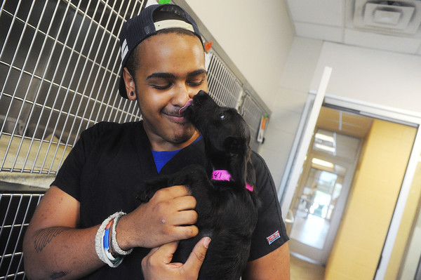 Globe/Roger Nomer<br /> Steven Smith plays with Curtsy, a dog up for adoption at the Joplin Humane Society on Friday afternoon.