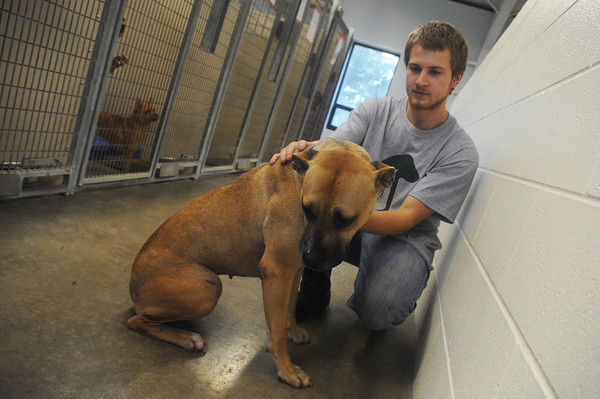 Globe/Roger Nomer<br /> Cody Tricks cares for Gricks, a dog up for adoption at the Carthage Humane Society on Wednesday.