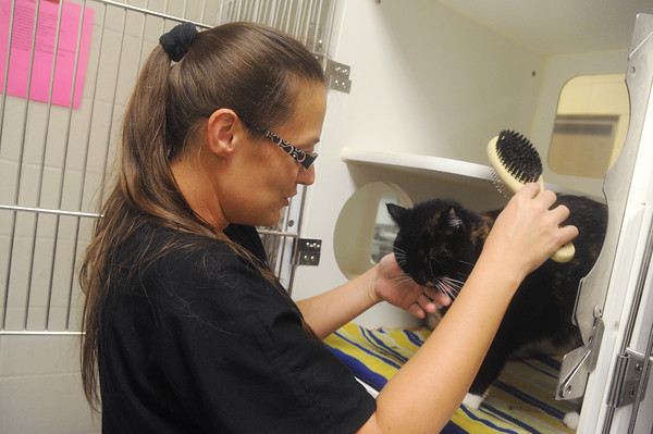 Globe/Roger Nomer<br /> Holly Carson brushes Baby, a cat up for adoption at the Joplin Humane Society.