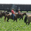 Globe/Roger Nomer<br /> Horseback riders search a field near 100th Lane along railroad tracks, near where the body of Adriaunna Horton was found on Wednesday afternoon.
