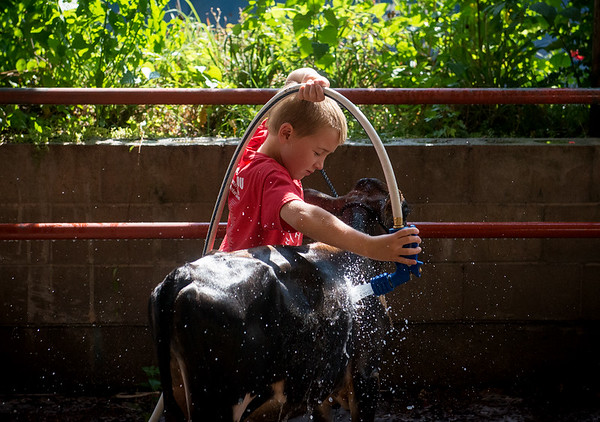 Globe/Roger Nomer<br /> Carsen Rhodes, 7, Boliver, closes his eyes to shield from the spray as he washes his bucket calf on Thursday at the Lamar Free Fair.