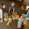 Globe/Roger Nomer<br /> Caleese Long, 14, left, and Maddie Baden, 16, talk with Rich Martin, Northbrook, Ill., and pet his comfort dog Luther on Sunday at Immanuel Lutheran Church.