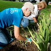 Globe/Roger Nomer<br /> Lin Harris, left, and Barbara Remillard help pull weeds on Wednesday in Carl Junction with Brush of Kindness.
