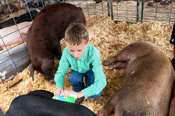 Globe/Roger Nomer<br /> Levi Simpson, 7, prepares his hogs for show on Wednesday at the Cherokee County Fair in Columbus.
