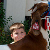 Globe/Roger Nomer<br /> Knox Harvey, 4, Lamar, keeps an eye on his goat as he grooms it on Thursday at the Lamar Free Fair.