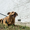 Globe/Roger Nomer<br /> Nellie, the mascot of East Town, lies in front of sketchings of the East Town mural on Wednesday.