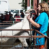 Globe/Roger Nomer<br /> Caitlyn Garrett, 10, Oronogo, washes her lamb on Thursday at the Lamar Free Fair.