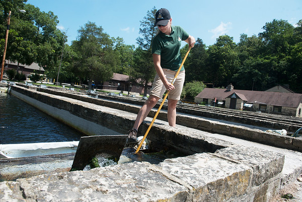Globe/Roger Nomer<br /> Makayla Blake, resource assistant and volunteer coordinator at Roaring River State Park, cleans a run at the hatchery on Thursday.
