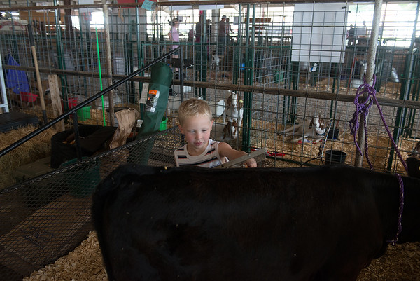Globe/Roger Nomer<br /> Jackson French, 4, helps his brother groom his calf on Wednesday at the Cherokee County Fair in Columbus.