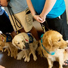 Globe/Roger Nomer<br /> Lutheran Church Charities brought in seven comfort dogs to Immanuel Lutheran Church on Sunday.