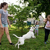 (from left) Kathryn Abelein, 12, Zoey Naff, 4, and Helayna Copenharve, 9, play fetch with Milla on Wednesday in Joplin.<br /> Globe | Roger Nomer