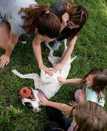 (clockwise from top) Kyleigh Naff, 12, Zoey Naff, 4, Helayna Copenharve, 9, and Kathryn Abelein, 12, pet Milla on Wednesday in Joplin.<br /> Globe   Roger Nomer