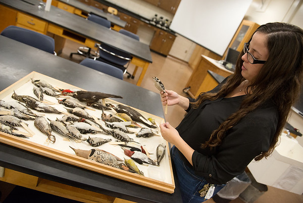 Christine Brodsky, assistant professor of biology at Pittsburg State University, talks about species of birds commonly found in the area on Thursday at PSU.<br /> Globe   Roger Nomer