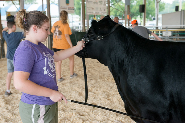 Taylor Fent, 14, Wyandotte, works on her showmanship at the Ottawa County Fair on Friday.<br /> Globe | Roger Nomer