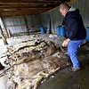 Mike Cloud lifts stands near a pile of brine-soked bison hides on Thursday at Cloud's Meats. Cloud said he is losing about $2 per hide since tariffs on leather have taken effect.<br /> Globe | Laurie Sisk
