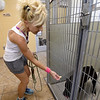 "Joplin Humane Society volunteer Kelly Johnson spends a little time with ""Chaya,"" a boxer-pit bull mix at the Joplin Humane Society on Tuesday.<br /> Globe 