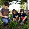 From the left: Saffron Potts, 12, Calypso Ruddick, 8 and Levi Crane, 6, help clear weeds and debris on Tuesday afternoon at the Joplin Public Library. The trio are part of Kids for Peace, which also has volunteered at local food pantries and the Joplin Humane Society.<br /> FGlobe | Laurie Sisk