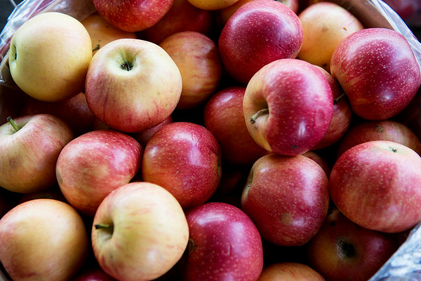 Gala apples are for sale at Murphy Orchard in Marionville on Friday.<br /> Globe | Roger Nomer