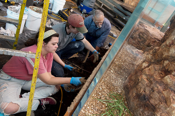 (from left) Kate McKalip, Thomas Brooks and Terry Chase work on an aquarium at the Shoal Creek Conservation Education Center on Thursday.<br /> Globe | Roger Nomer