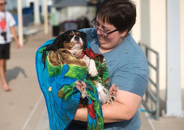 Following an afternoon of swimming, Joeanna Brokob dries off her dog Theodore on Saturday during the Doggie Dive In at Ewert Park.