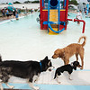 Dogs play in the water on Saturday during the Doggie Dive In at Ewert Park.<br /> Globe | Roger Nomer