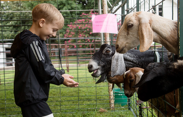 Kooper Minton, 3, finds himself rather popular as he approaches with a handul of feed for the goats at the Kramer Livestock Farm Petting Zoo on Friday in Pittsburg as part of Little Balkans Days.<br /> Globe | Roger Nomer