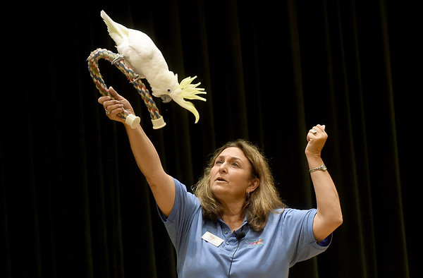 """Dickerson Zoo (Springfield) docent Candy Little introduces """"Professor Elliott,""""  a silver crested cockatoo, to the audience during a presentation as part of the Oceania Semester on Wednesday at Missouri Southern. Audience members also had a close up look at a blue tongued skink, a bearded dragon and a sugar glider - animals all native to Australia.<br /> Globe   Laurie SIsk"""