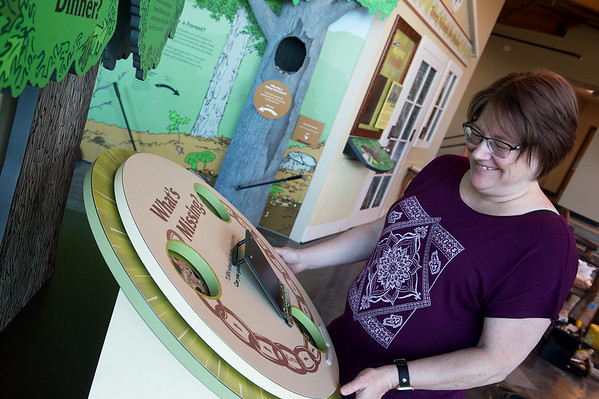 Lisa May, exhibit designer with the Missouri Department of Conservation, looks at one of the new exhibits at the Shoal Creek Conservation Education Center on Thursday.<br /> Globe | Roger Nomer