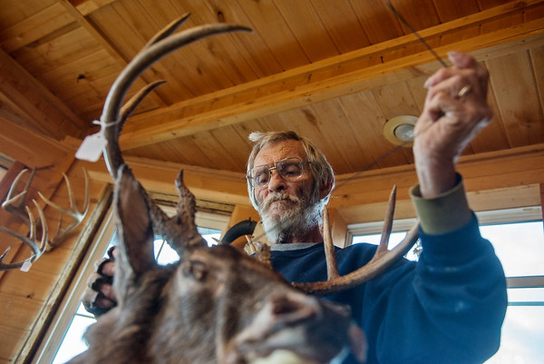 Globe/Roger Nomer<br /> Jerry Vickers sews up a deer on Thursday at his taxidermy shop in Pineville.