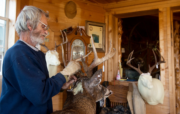 Globe/Roger Nomer Jerry Vickers sews up a deer on Thursday at his taxidermy shop in Pineville.