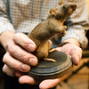 World War I collector Shannon Kelly holds a taxidermied European Brown Rat, known for inhabiting foxholes with WWI soldiers.<br /> Globe | Laurie Sisk
