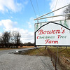 The Bowen Christmas Tree Farm near Pittsburg will be closing after more than three decades. <br /> Globe | Laurie Sisk
