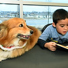 "Six-year-old Dominic Myers reads to ""Dudley,"" a 10-year-old Corgi during Dog Day Afternoon on Tuesday at the Joplin Public Library. <br /> Globe 