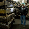 J-M Farms Vice President of Operations Scott Englebrecht shines a light on one of 250 beds of crimini mushrooms on Friday at the Miami company's site.<br /> Globe | Laurie Sisk