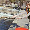 Globe/Roger Nomer<br /> Globe writer Andra Stefanoni releases a trout into an outdoor raceway after an assessment at Roaring River State Park hatchery on Friday, Feb. 14, 2014.