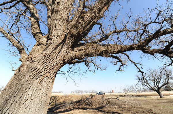 A large tree hangs over part of the five-acre wetland area being constructed at Northeasten Oklahoma A&M.<br /> Globe | Laurie Sisk