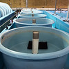 Circular tanks are being installed for the Topeka shiner minnow at the Neosho National Fish Hatchery.<br /> Globe | Roger Nomer