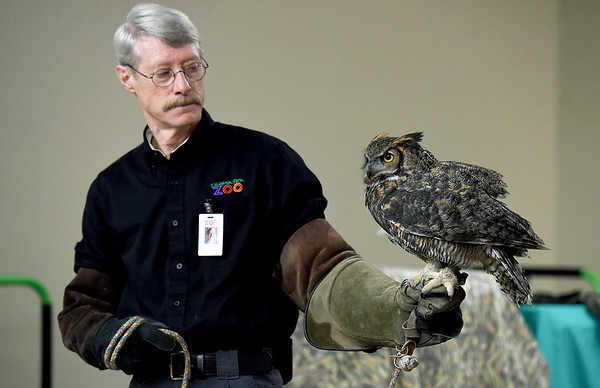 """Springfield Dickerson Park Zoo Docent Todd Robitsch handles """"Hedley,"""" a great horned owl during a specoal program on Friday night at the Shoal Creek Conservation Education Center. About 65 participants met various owls and went owl sightseeing with flashlights through Wildcat Glades.<br /> Globe 