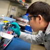 Wang Lin, graduate student at Pittsburg State University, demonstrates how to make an electrode for a battery on Tuesday at PSU's Kansas Polymer Research Center in Pittsburg.<br /> Globe | Roger Nomer