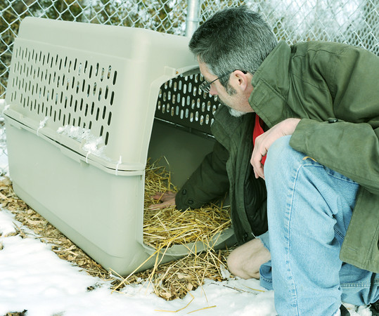 Globe/Roger Nomer<br /> Rob Smith, kennel manager at the Joplin Humane Society, spreads hay at an outdoor kennel on Thursday in preparation for cold temperatures.