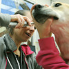 Globe/Roger Nomer<br /> Veterinarian Pamela Helm checks over Kara at Main Street Pet Care on Thursday morning.